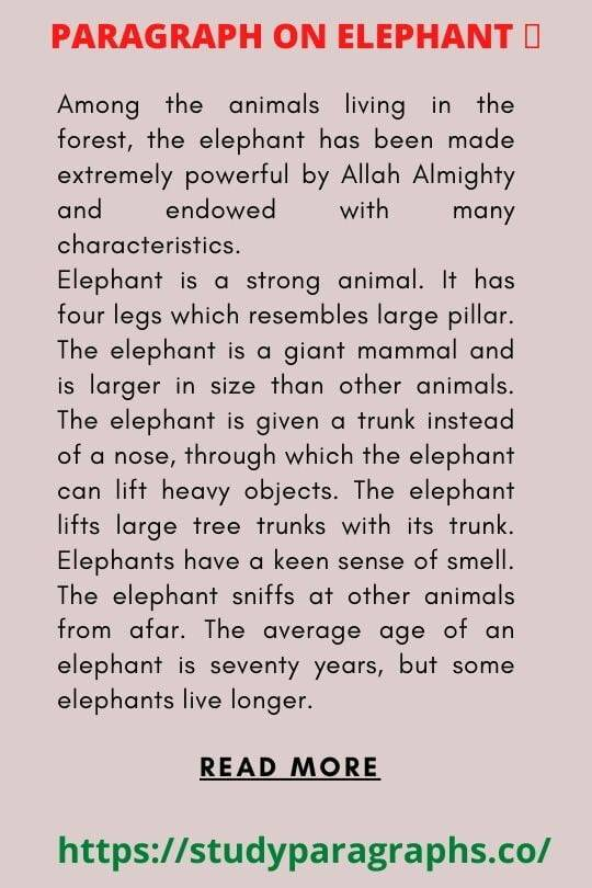 Writing a Paragraph on elephant